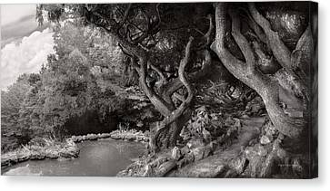 Branch Hill Pond Canvas Print - Landscape - The Forbidden Forest by Mike Savad