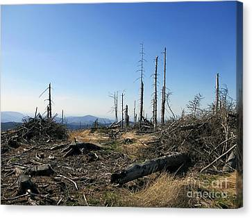 Landscape With Dead Old Trees In Poland, Beskid Slaski Near The Skrzyczne Peak Canvas Print by Caio Caldas