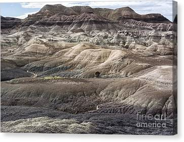 Landscape With Many Colors Canvas Print by Melany Sarafis