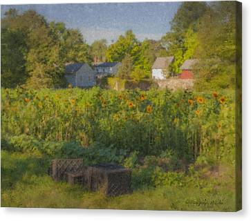 Langwater Farm Sunflowers And Barns Canvas Print