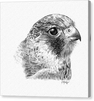 Lanner Falcon Canvas Print by Kathie Miller
