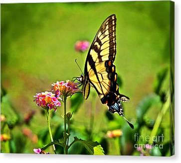 Lantana Monarch Canvas Print