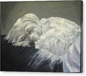 White Maltese Canvas Print - Lap Dog by Elizabeth Ellis