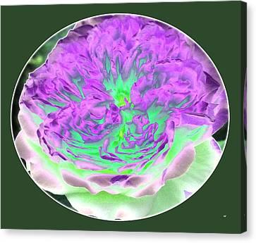Laraine Rose Canvas Print by Will Borden