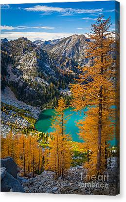 Larches At Colchuck Canvas Print by Inge Johnsson