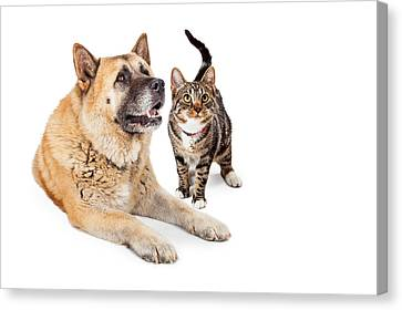 Large Dog And Cat Looking Up Together Canvas Print by Susan Schmitz