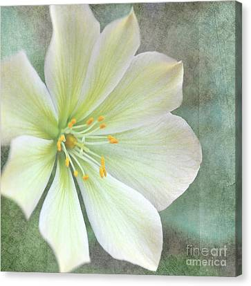 Canvas Print featuring the pyrography Large Flower by Lyn Randle