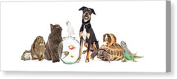 Large Group Of Pet Animals Together Canvas Print