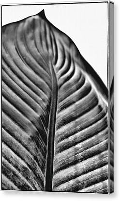 Large Leaf Canvas Print