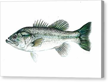 Large Mouth Bass Canvas Print by Jim  Romeo