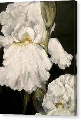 Large White Iris Canvas Print by Carol Sweetwood