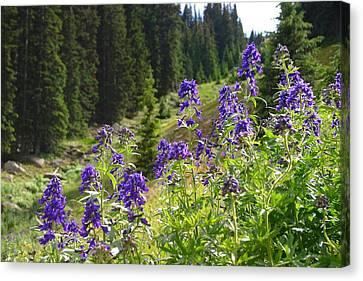 Canvas Print featuring the photograph Larkspur Along Trail Ridge Road by Perspective Imagery