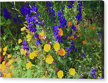 Larkspur And Primrose Garden Canvas Print