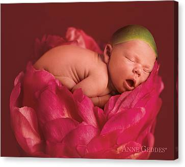 Lars In Peony Canvas Print by Anne Geddes