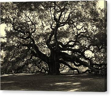 Last Angel Oak 72 Canvas Print
