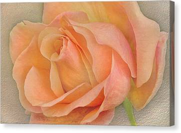 Last Autumn Rose Canvas Print