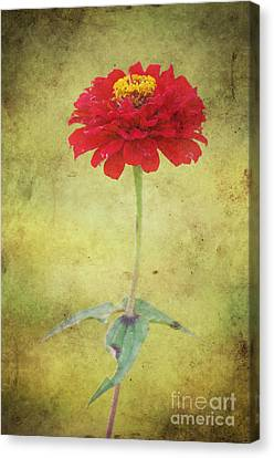 Last Days Of Summer Canvas Print by Angela Doelling AD DESIGN Photo and PhotoArt