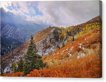 Last Fall Canvas Print by Chad Dutson