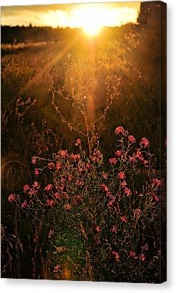 Canvas Print featuring the photograph Last Glimpse Of Light by Jan Amiss Photography