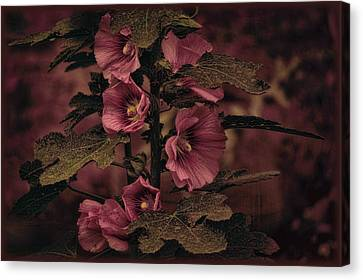Canvas Print featuring the photograph Last Hollyhock Blooms by Douglas MooreZart