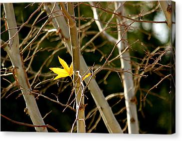 Canvas Print featuring the photograph Last Leaf by Kume Bryant