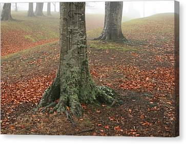 Last Leaves Of Autumn Canvas Print by Terry Perham