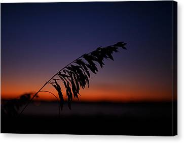 last light at Hilton Head Island Canvas Print by Shane Holsclaw
