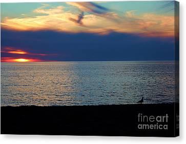 Tropical Bird Postcards Canvas Print - Last Light Gull by Robert Wilder Jr