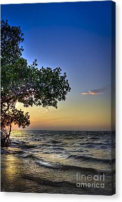 Emerson Canvas Print - Last Light by Marvin Spates