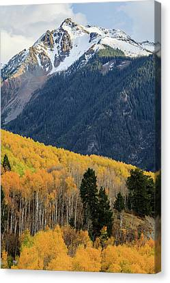 Canvas Print featuring the photograph Last Light Of Autumn Vertical by David Chandler