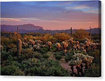 Canvas Print featuring the photograph Last Light On The Sonoran  by Saija Lehtonen