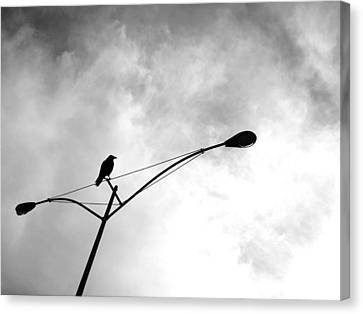 Canvas Print featuring the photograph Last One Standing by Jeff DOttavio