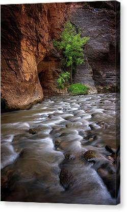 Canvas Print featuring the photograph Last Stand by Dustin LeFevre