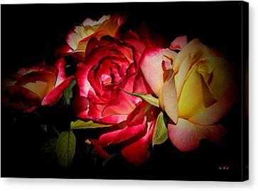 Last Summer Roses Canvas Print by Gabriella Weninger - David