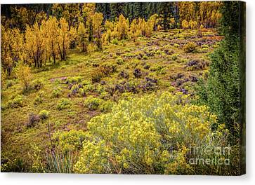 Fort Collins Canvas Print - Last Warm Days by Jon Burch Photography