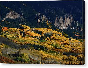 Canvas Print featuring the photograph Late Afternoon Light On Aspen Groves At Silver Jack Colorado by Jetson Nguyen