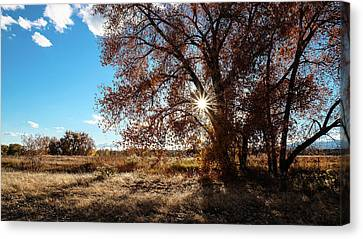 Canvas Print featuring the photograph Late Afternoon Sun by Monte Stevens
