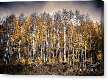Canvas Print featuring the photograph Late Fall by The Forests Edge Photography - Diane Sandoval