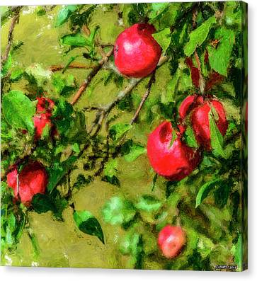 Late Summer Apples Canvas Print by Ken Morris