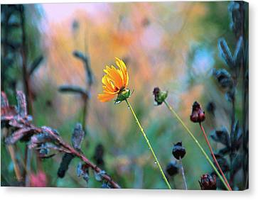 Late Summer Rain From The Forest Floor Canvas Print by Bob Orsillo