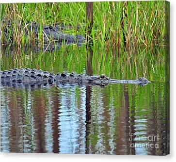 Canvas Print featuring the photograph Later Gator by Al Powell Photography USA