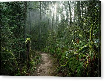 Latourell Trail Canvas Print by C Steele
