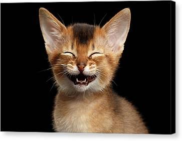 Laughing Kitten  Canvas Print