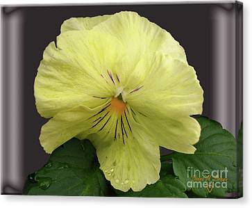 Canvas Print featuring the photograph Laughing Pansy by Donna Brown