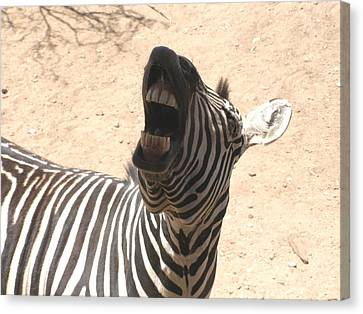 Canvas Print featuring the photograph Laughing Zebra by Jeanette Oberholtzer