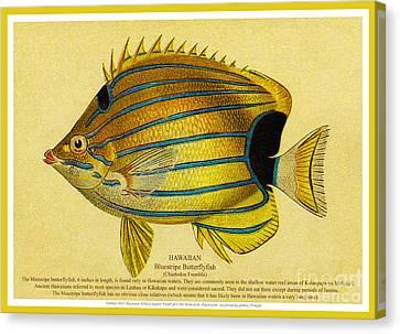 Lauhau - Bluestripe Butterflyfish Canvas Print by James Temple