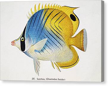 Lauhau Canvas Print by Hawaiian Legacy Archive - Printscapes