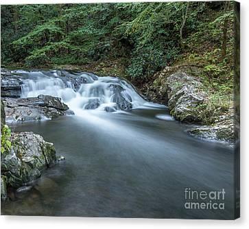 Laural Creek Cascade Canvas Print by Patrick Shupert