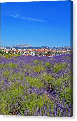 Lavendar Of Provence Canvas Print by Corinne Rhode