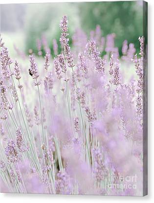 Canvas Print featuring the photograph Lavender 6 by Andrea Anderegg